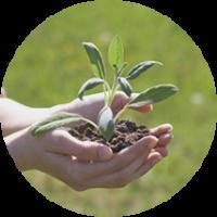sviluppo-sostenibile-2